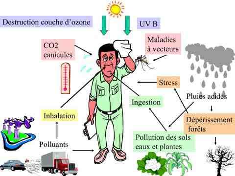 Quelles conséquences les activités humaines ont-elles sur l'environnement?