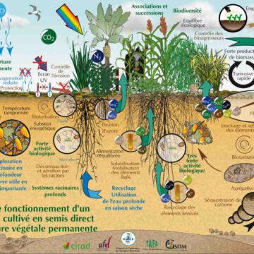 Comment fonctionne un écosystème naturel ?