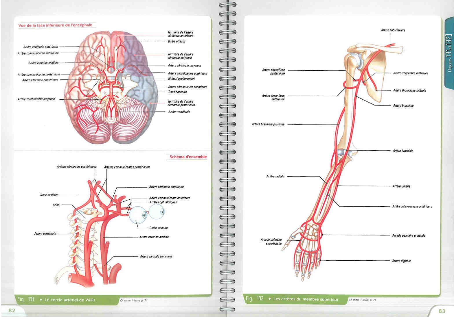 Pourquoi étudier l'anatomie?