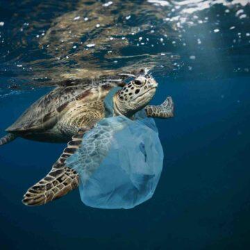 Quand a commencé la pollution marine ?