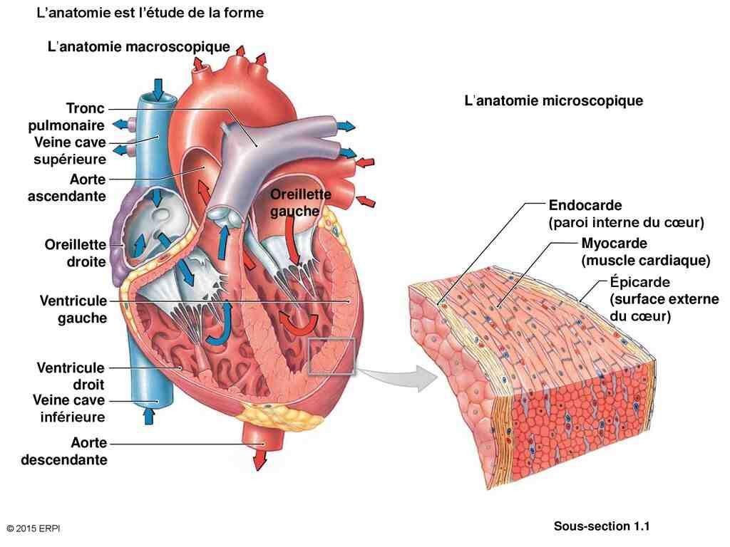 Quelle est la physiologie?