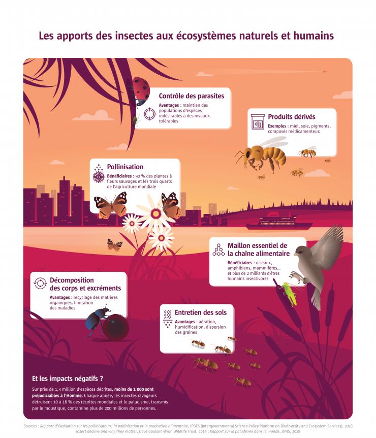 Quelle est l'importance de l'écosystème?