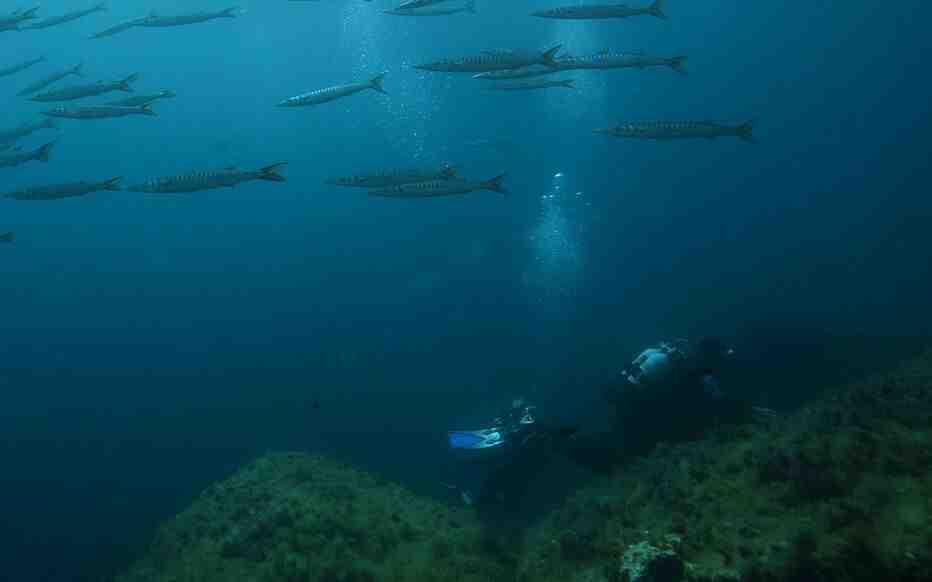 Quelles sont les causes de la pollution des océans?