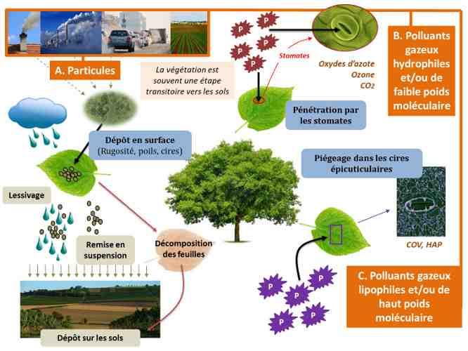 Quelles sont les conséquences de la pollution environnementale?