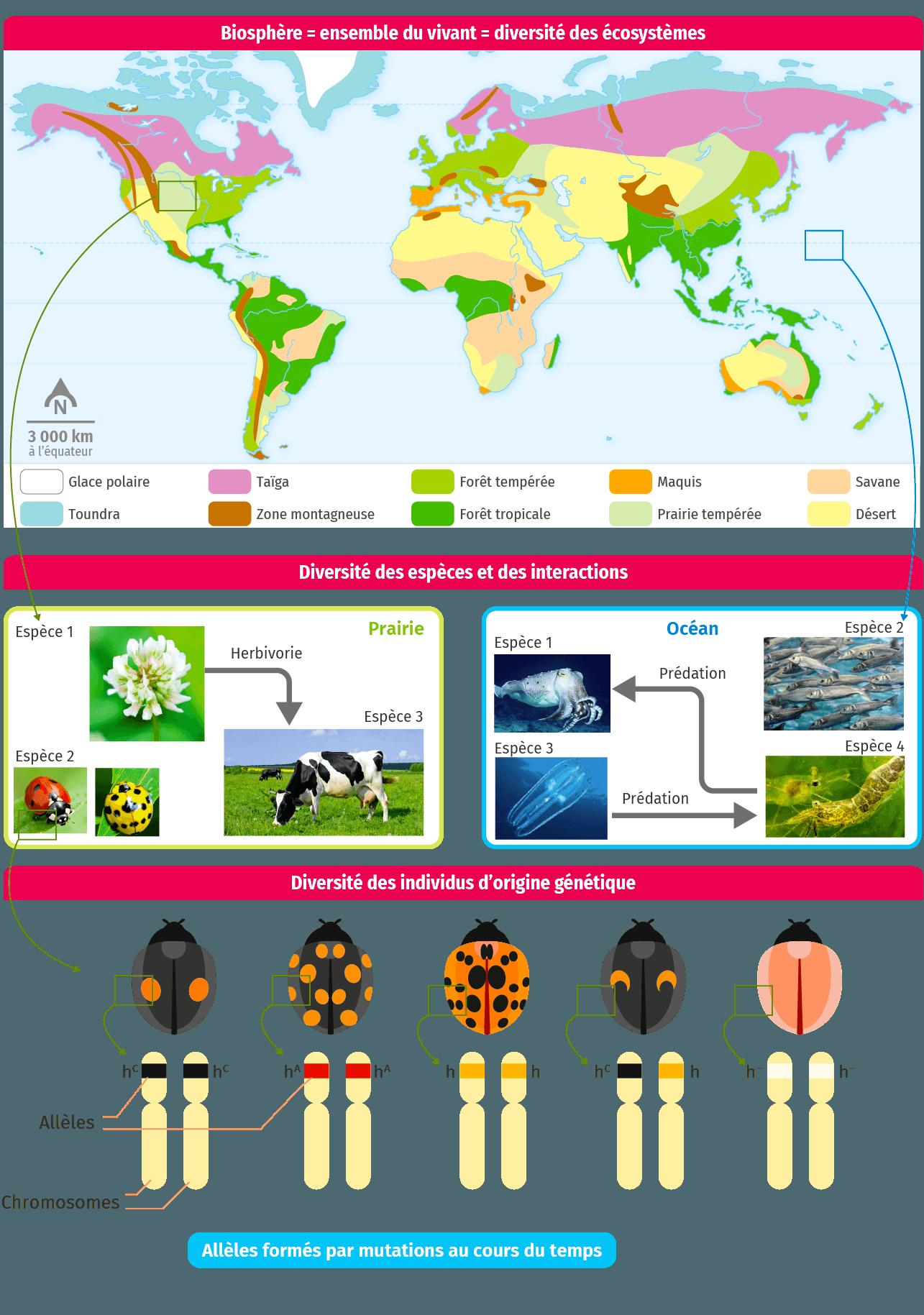 Quels sont les critères de classification des écosystèmes?