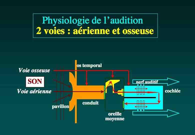 Quels sont les processus physiologiques?