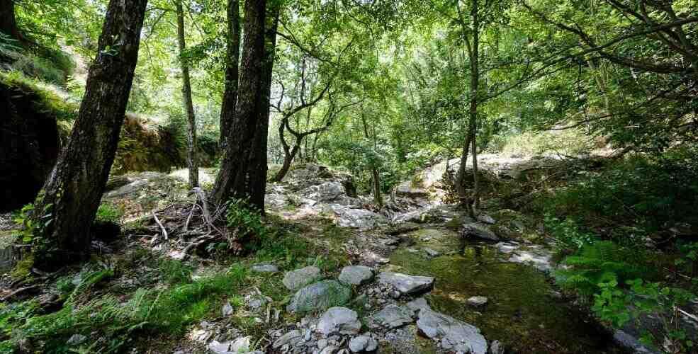 Qu'est-ce qu'un écosystème de définition simple?