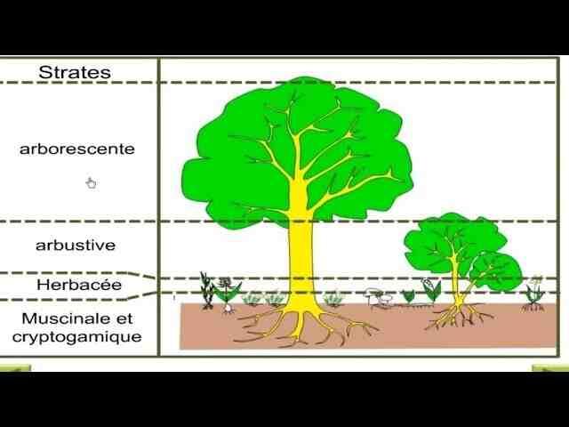 Comment réaliser une sortie écologique ?