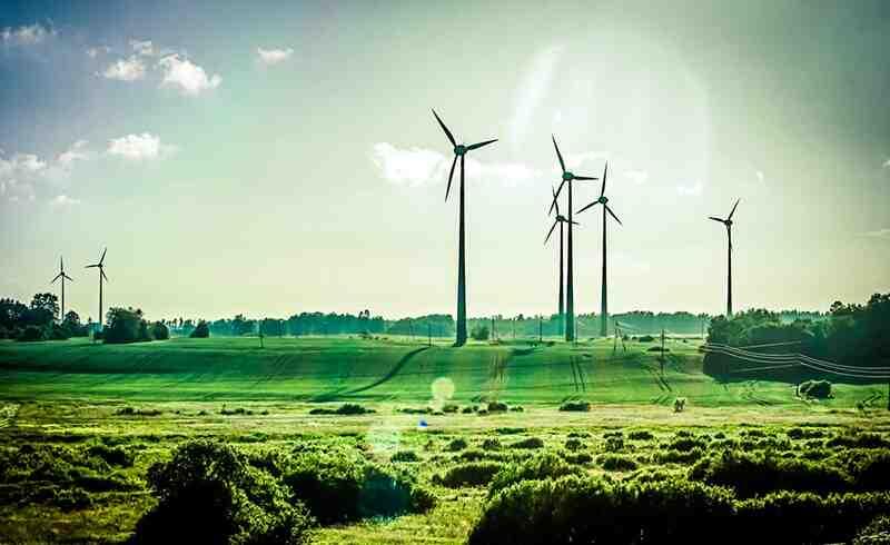 Quelle est la différence entre environnement et écologie ?