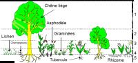 Quelle est l'importance de la technique de grille dans le comptage des plantes?