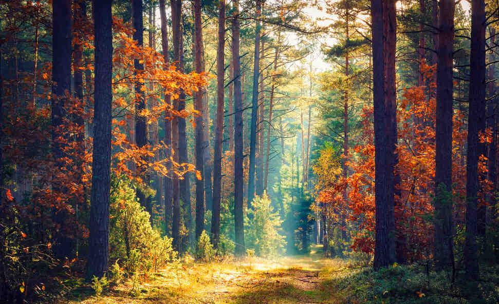 Quelles sont les branches de l'écologie?