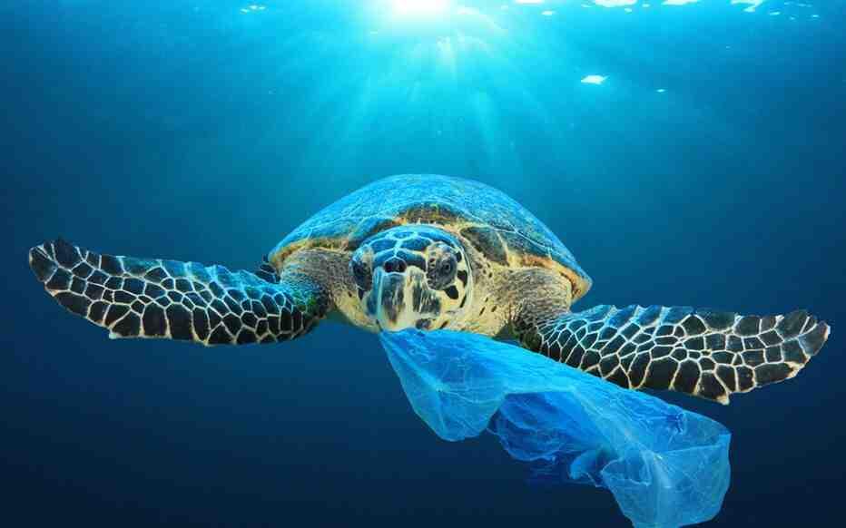 Quelles sont les causes de la pollution marine?