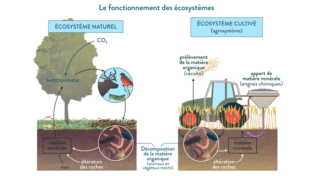 Quels facteurs influencent la biodiversité?