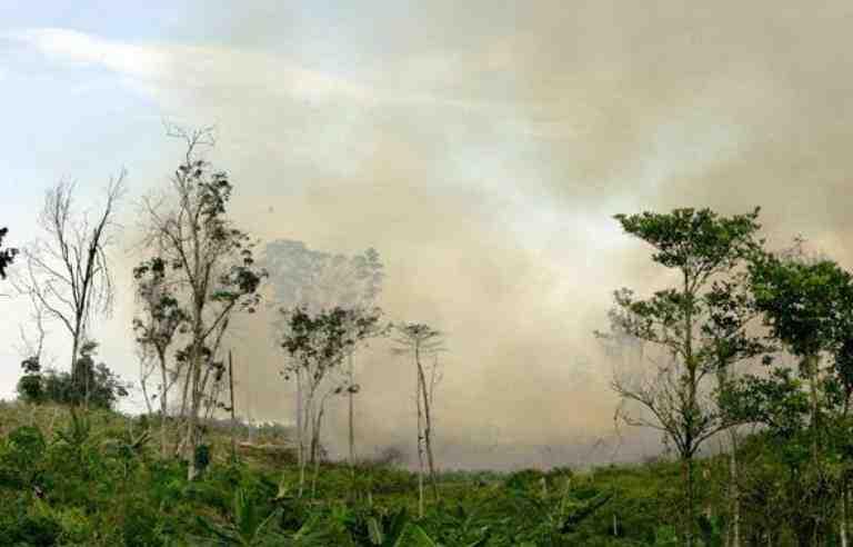 Comment faire pour lutter contre la déforestation ?