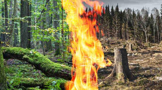 Comment faire pour protéger la forêt ?