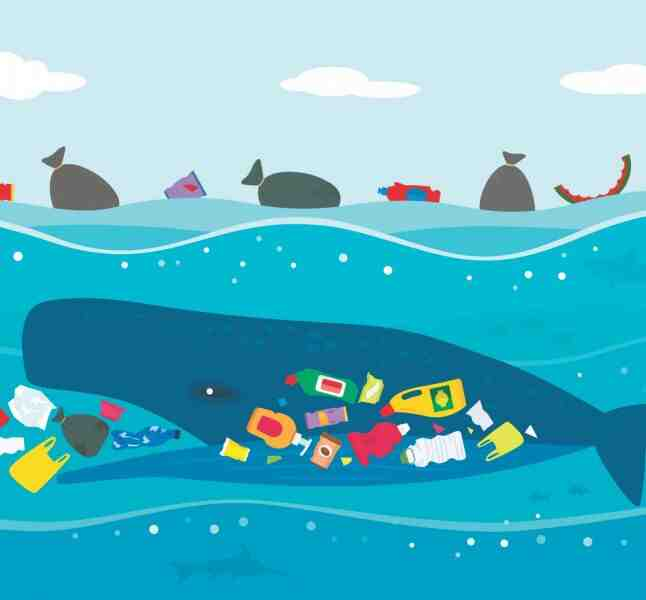 Comment faire pour protéger la mer ?