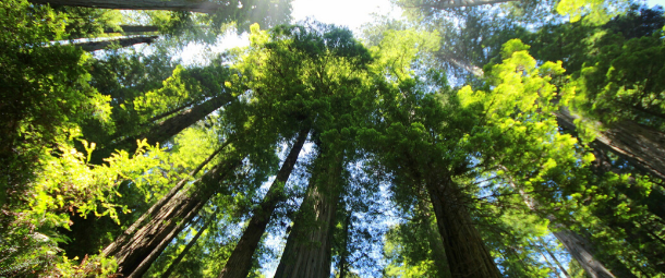 Comment protéger la nature?