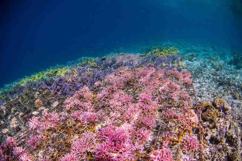 Comment protéger les animaux marins?