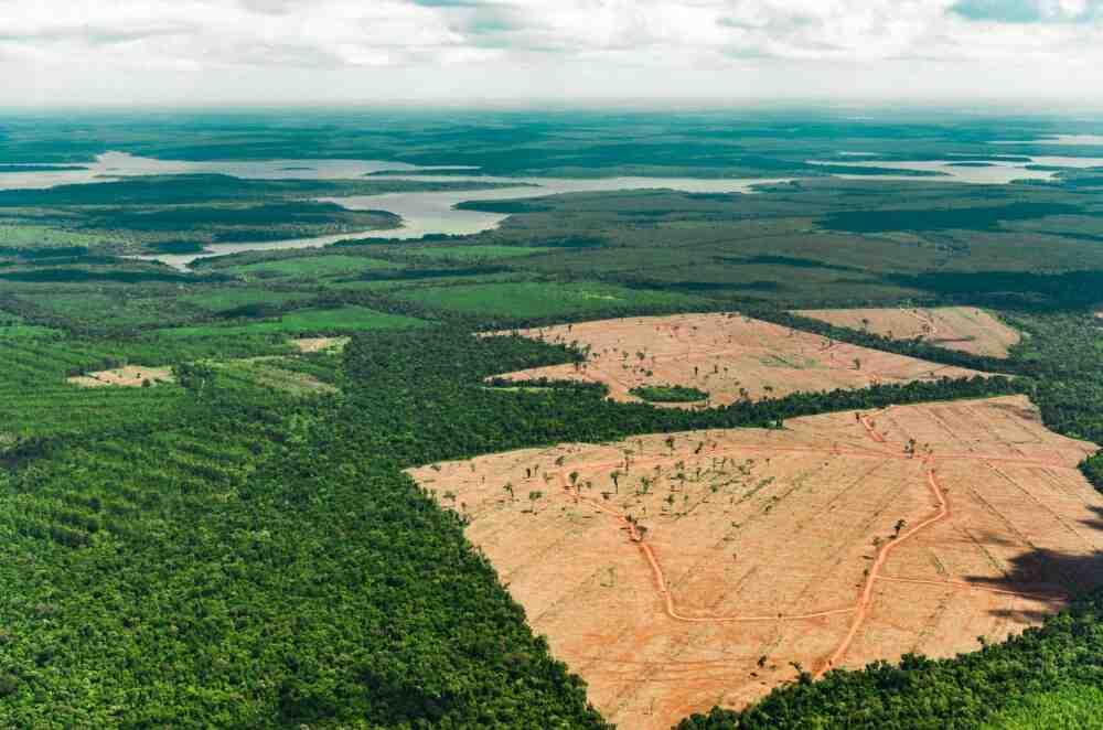 Comment protéger les arbres?