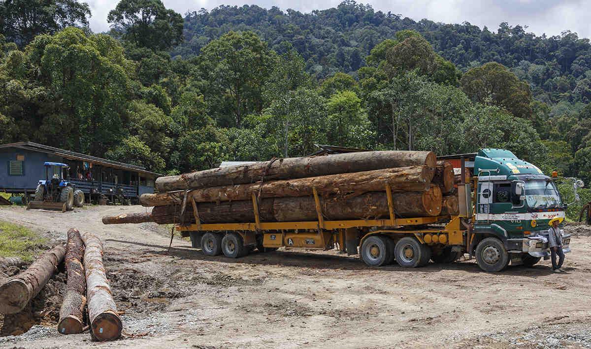 Comment protéger les forêts tropicales?