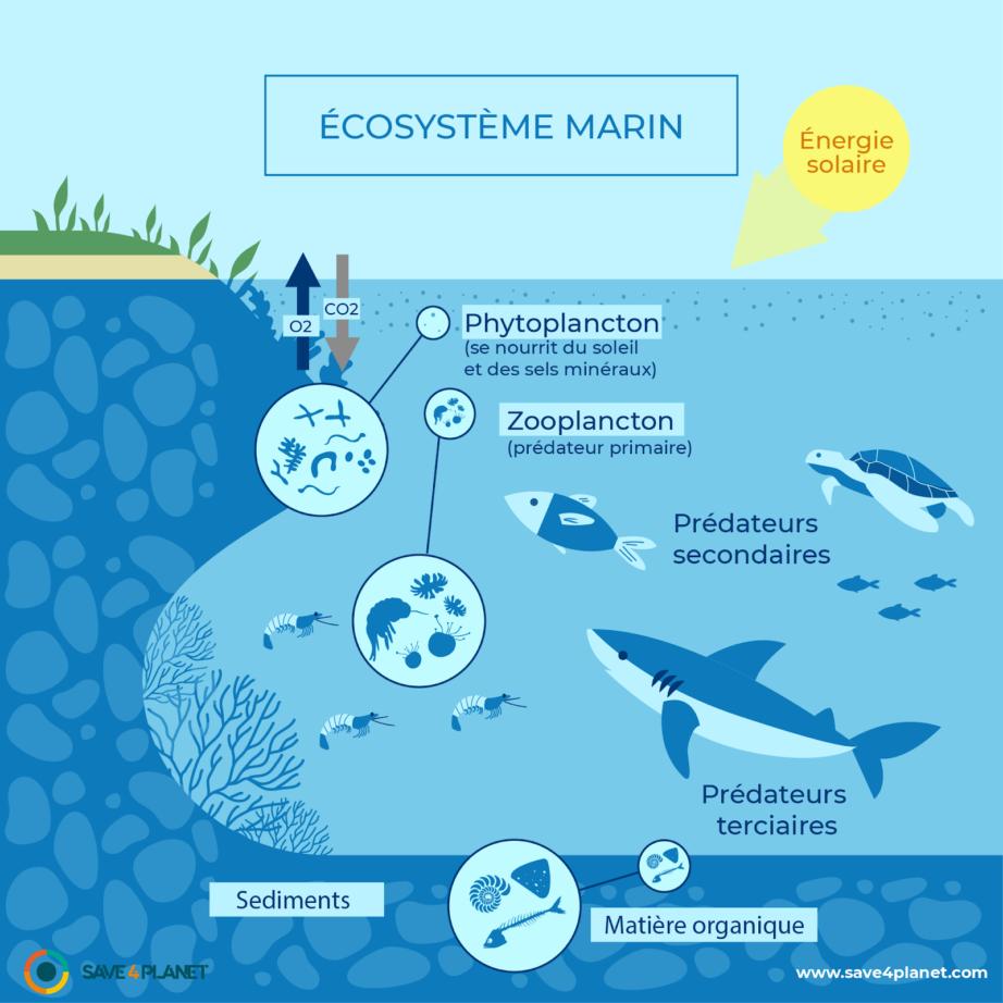 Comment se représente la biodiversité ?