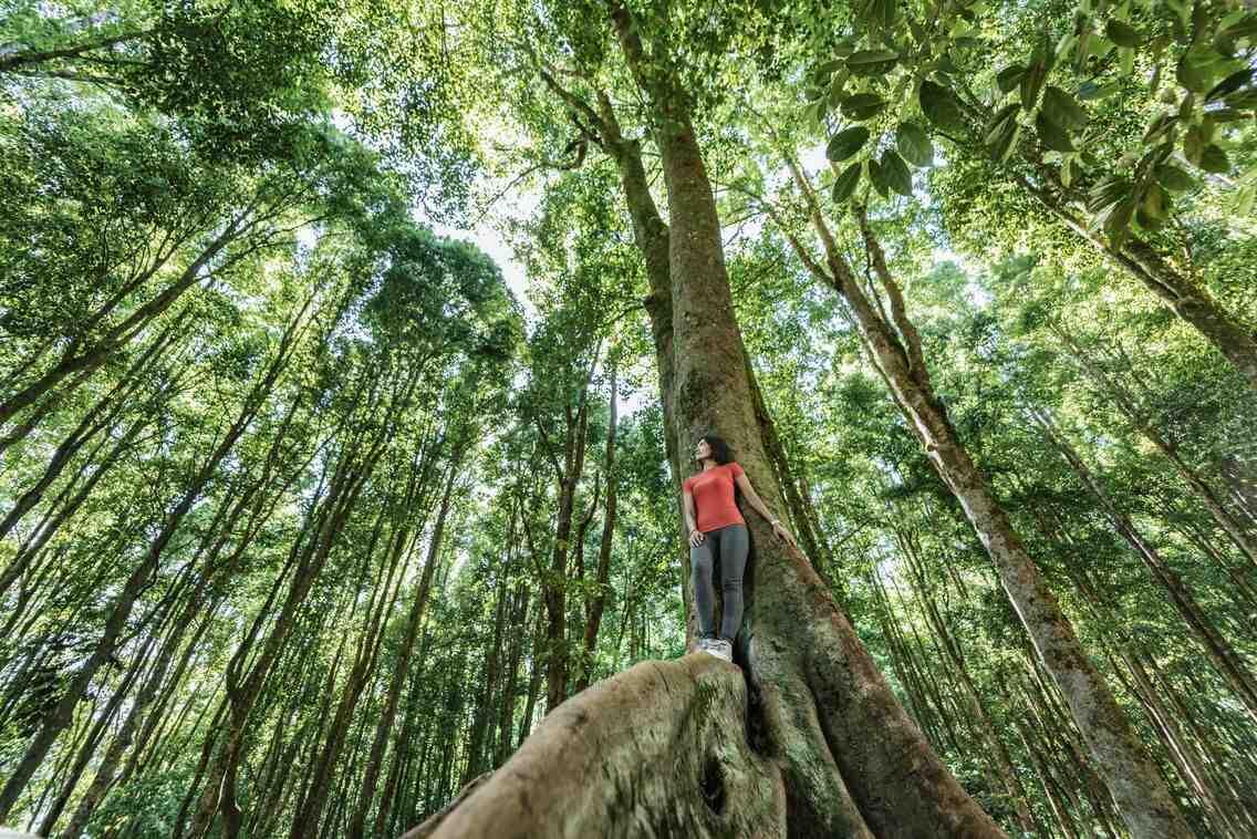 Pourquoi devons-nous protéger la forêt?