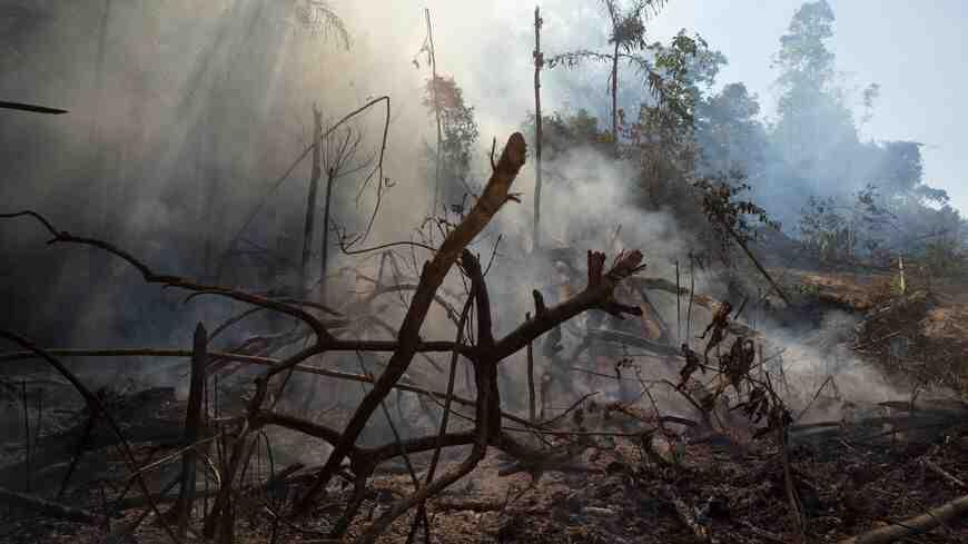Pourquoi il ne faut pas détruire la forêt ?