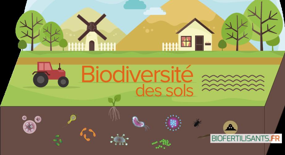 Pourquoi la préservation de la biodiversité Est-elle essentielle à l'homme ?
