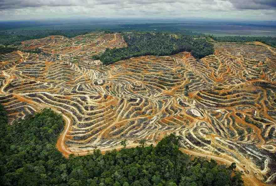 Pourquoi l'homme détruit-il la forêt?
