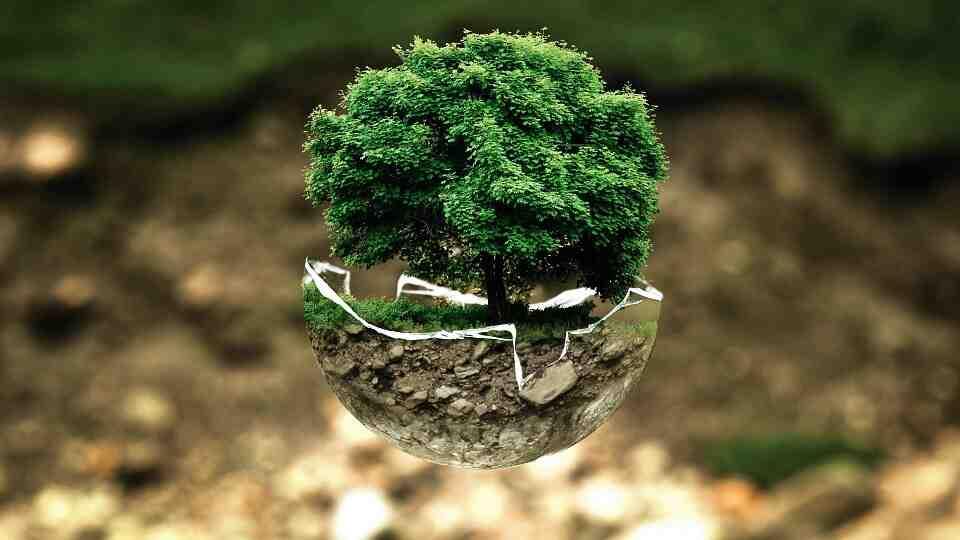 Pourquoi soutenons-nous le WWF?