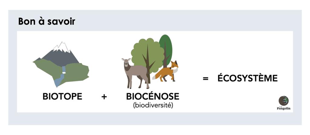 Quelle est la place de l'homme dans les différentes espèces?