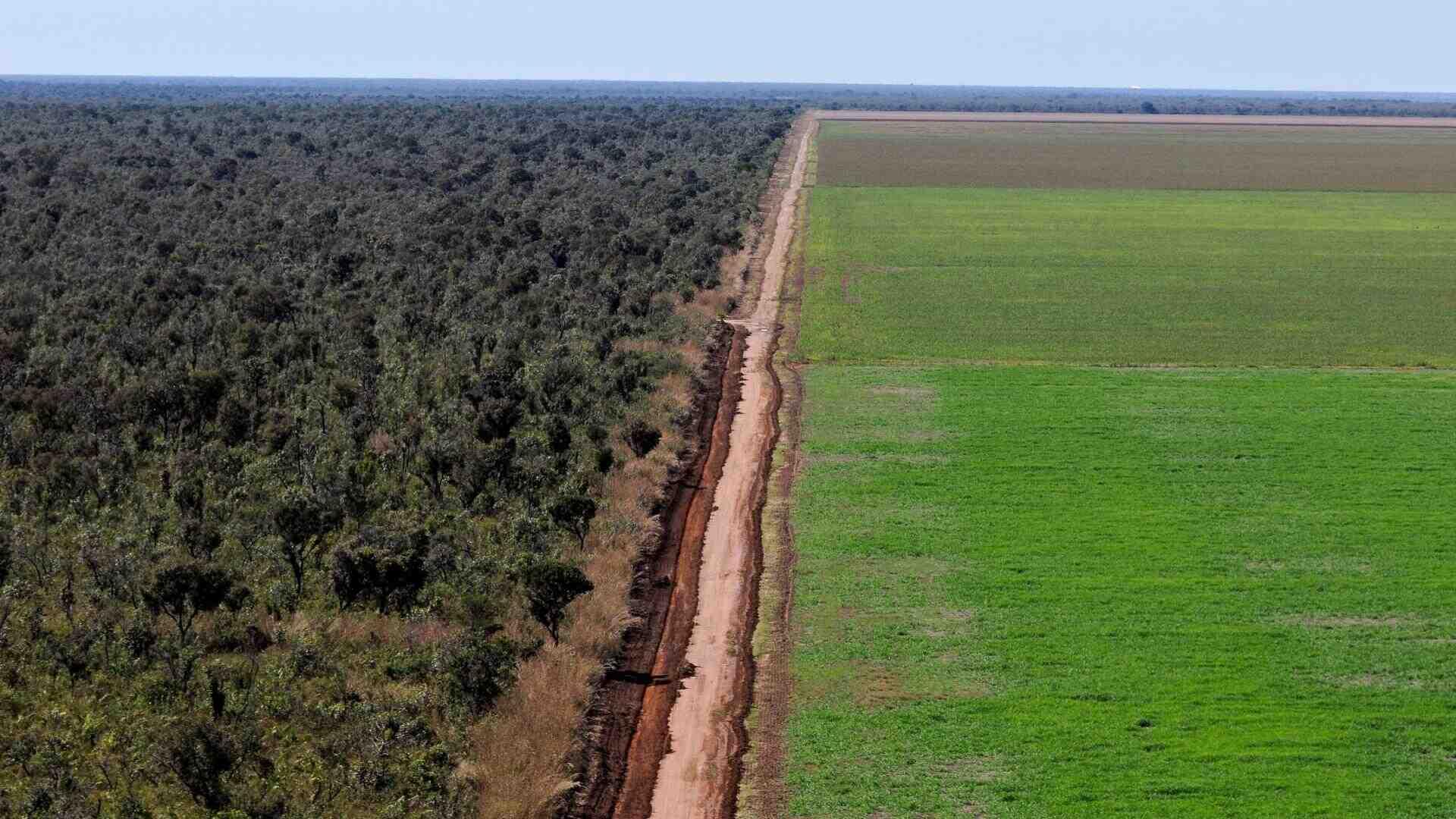 Quelles sont les causes de la déforestation?