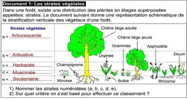 Quelles sont les différentes techniques utilisées en écologie?