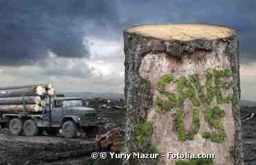 Quelles sont les solutions pour lutter contre la déforestation en Amazonie?