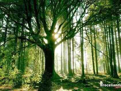 Quels sont les dangers de la forêt?