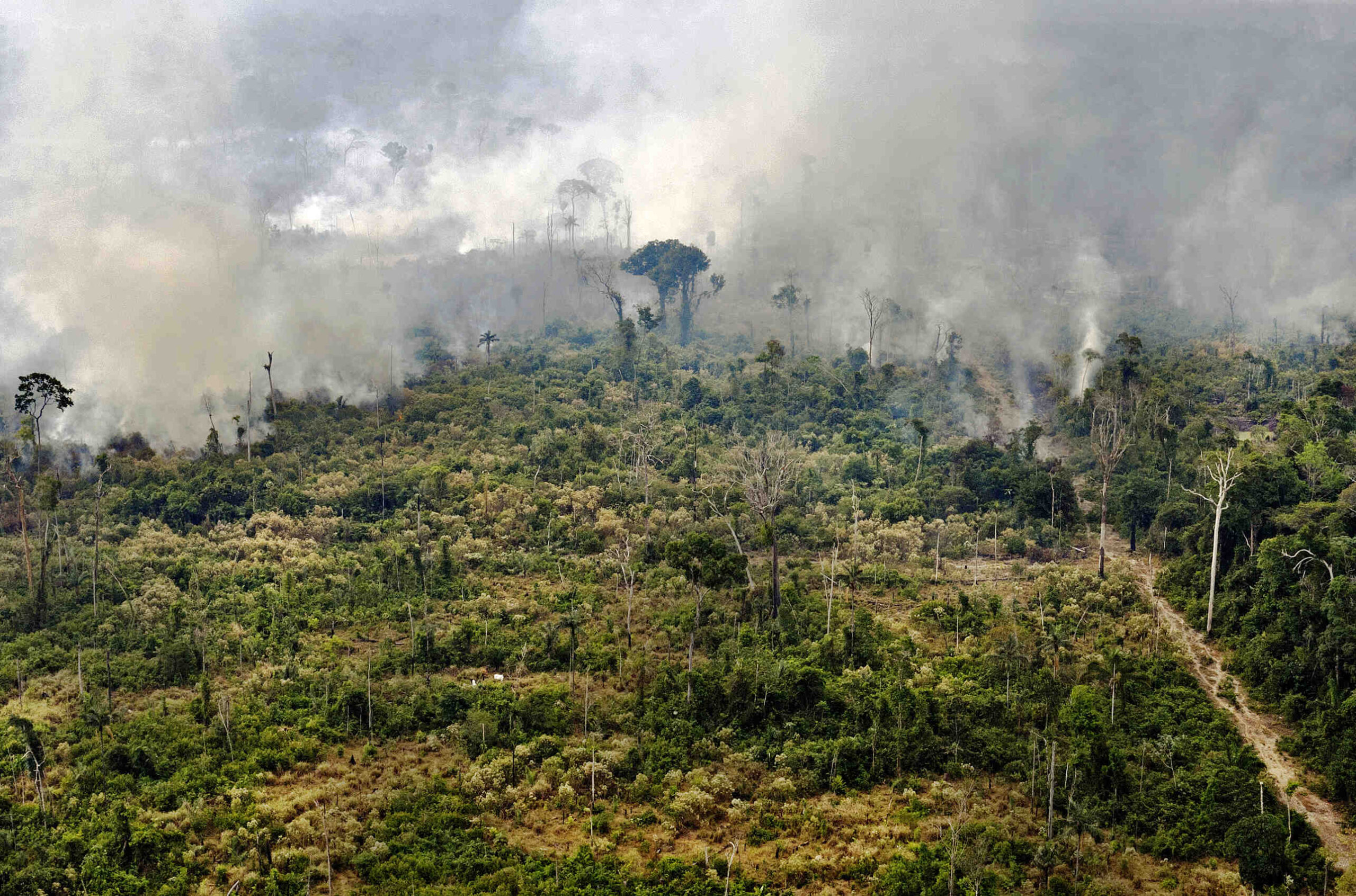 Quels sont les dangers qui menacent la forêt?