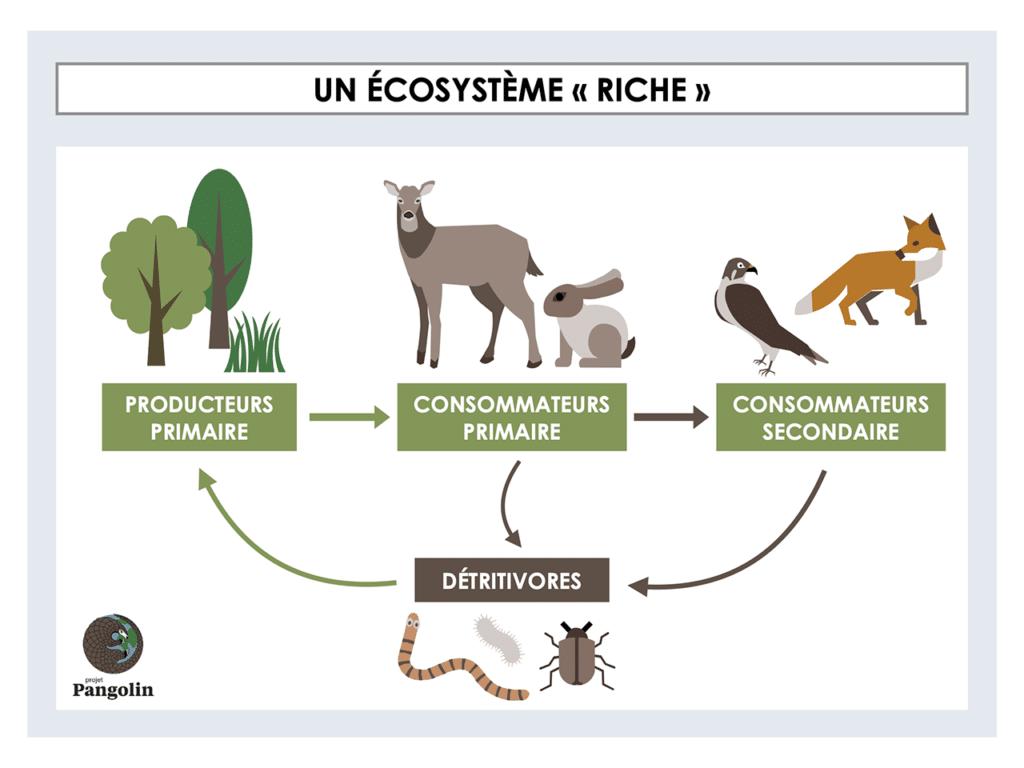 Quels sont les moyens de maintenir la biodiversité?