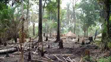 Qu'est-ce que la gestion forestière?