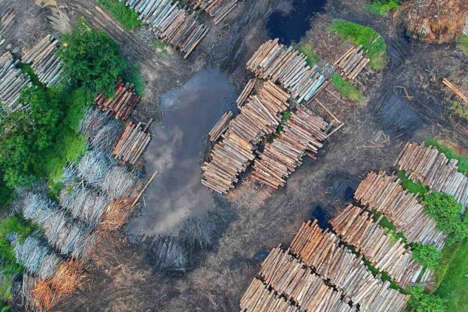 Qu'est-ce qui provoque la déforestation ?