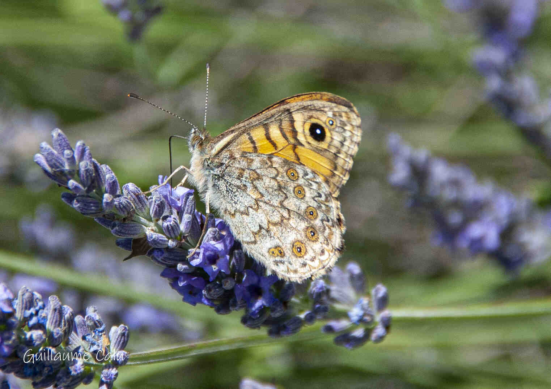 Comment la biodiversité est-elle mesurée ?