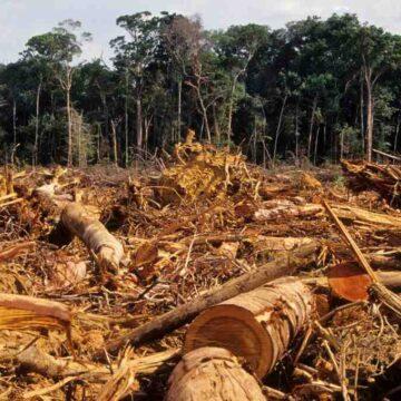 Comment l'homme détruit la forêt ?