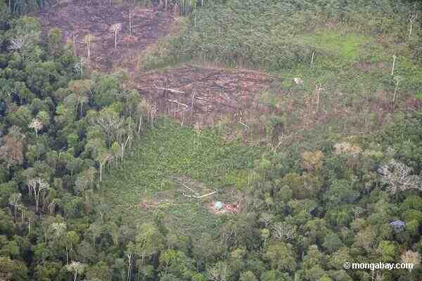 Comment on peut utiliser la forêt tout en protégeant l'environnement ?