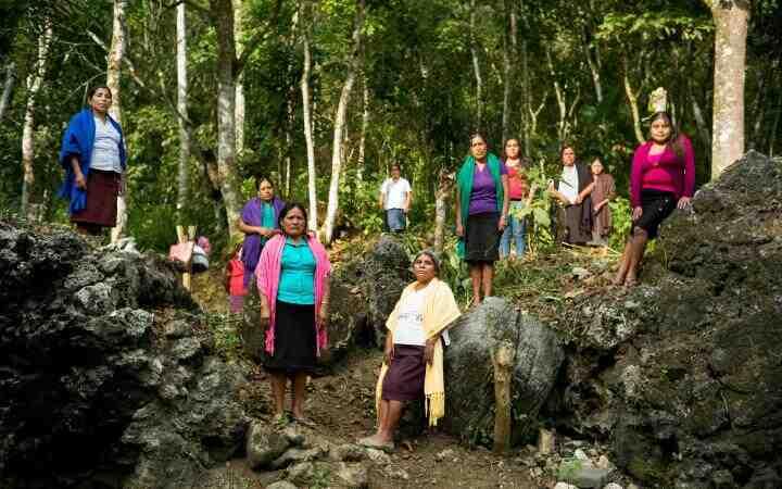 Comment protéger les forêts tropicales ?