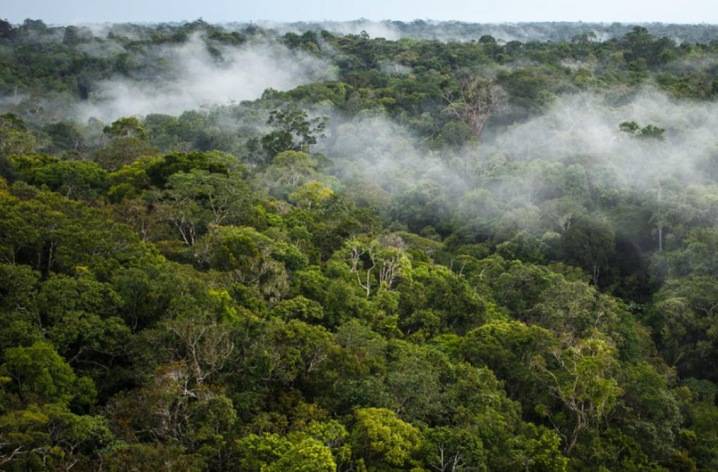 Comment utilise-t-on la forêt ?