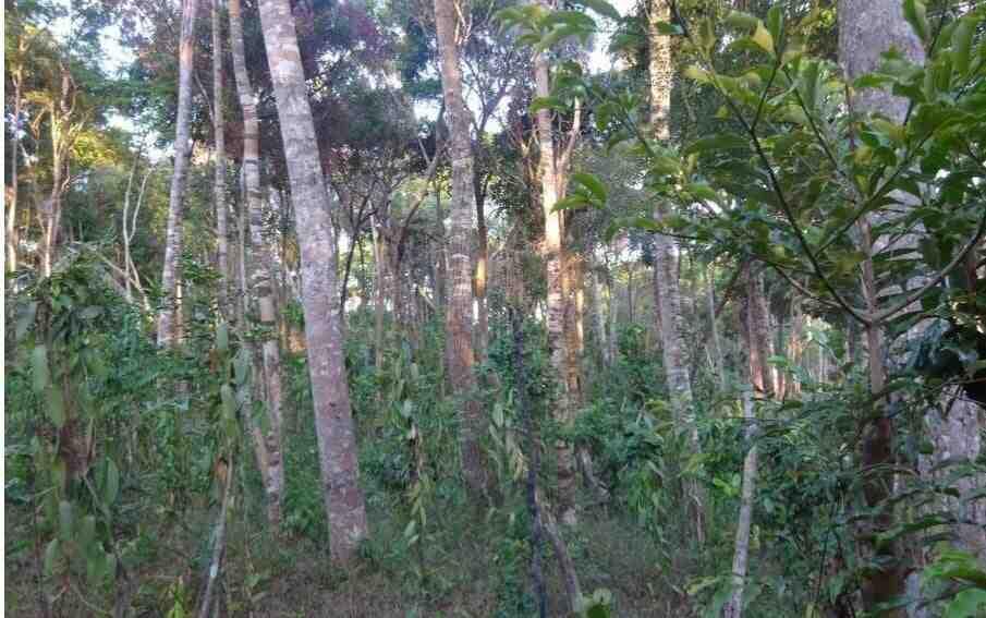 Pourquoi protéger la forêt ?