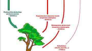 Quelle est l'importance de la forêt ?