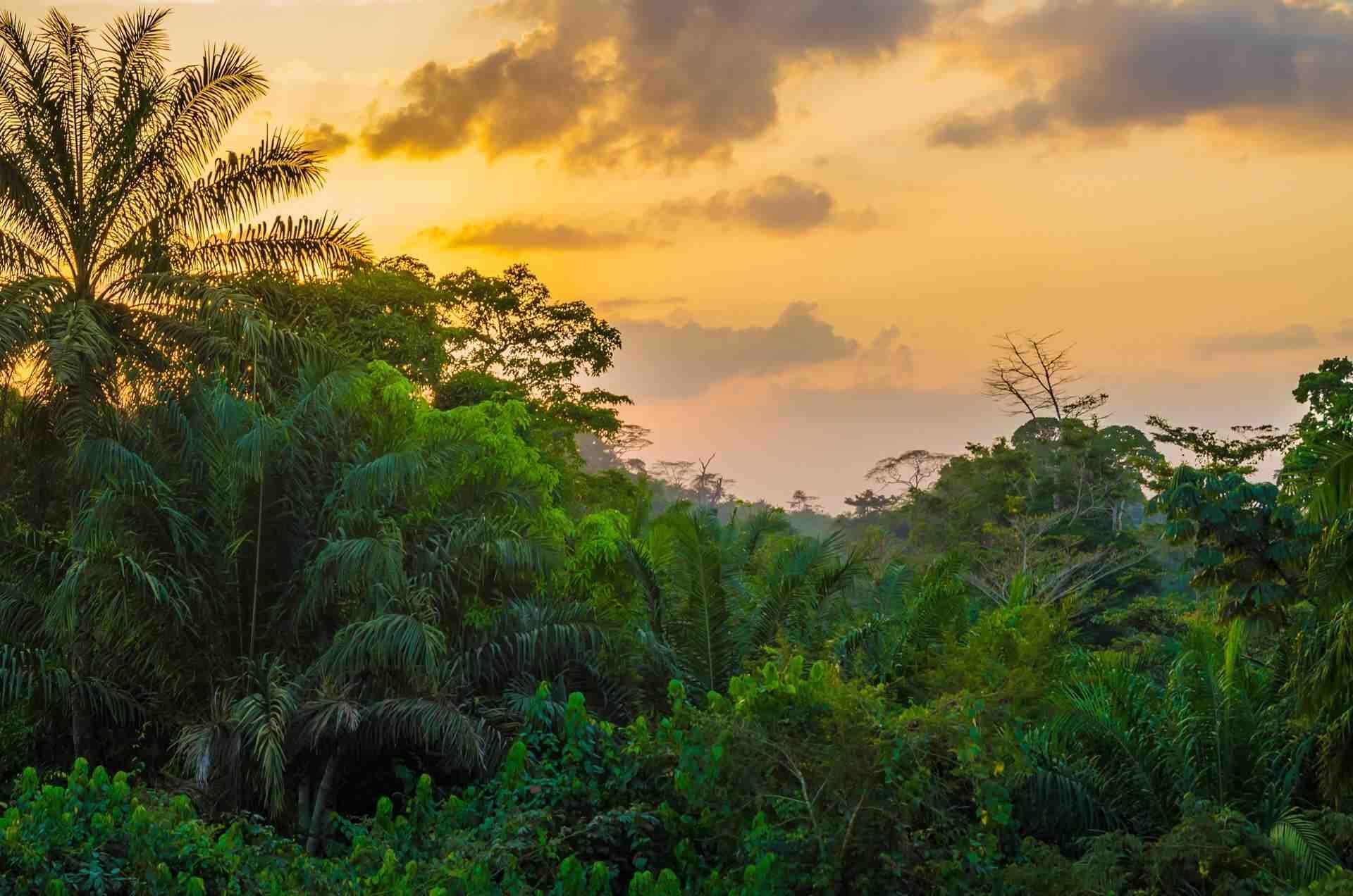 Quelle est l'importance d'une forêt?