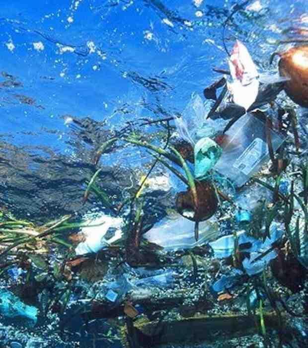 Quelles sont les causes et les conséquences de la pollution de l'eau ?