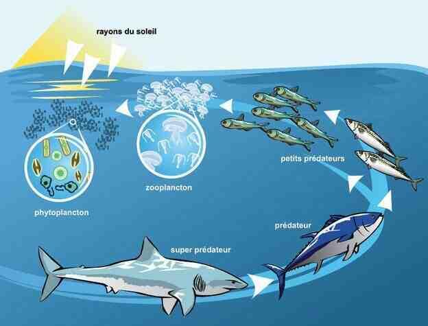 Quelles sont les conséquences de la pollution des océans ?