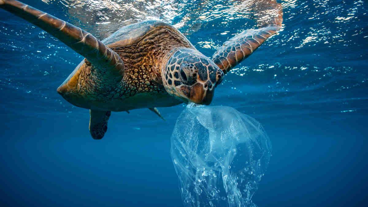 Quels sont les effets sur la vie marine ?